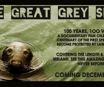 The Great Grey Seal